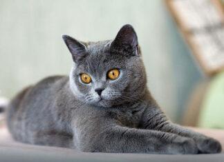 Jaki żwirek dla kota najlepiej wybrać